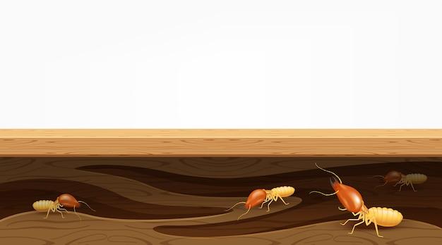 Nidos de termitas en tablones de madera, las termitas destruyen la mesa