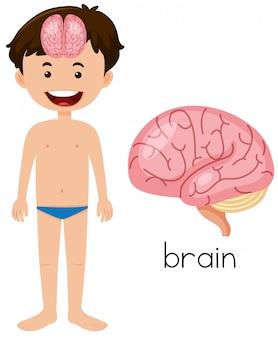 Niño con la colocación del cerebro