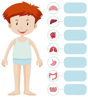 Niño humano y diferentes órganos