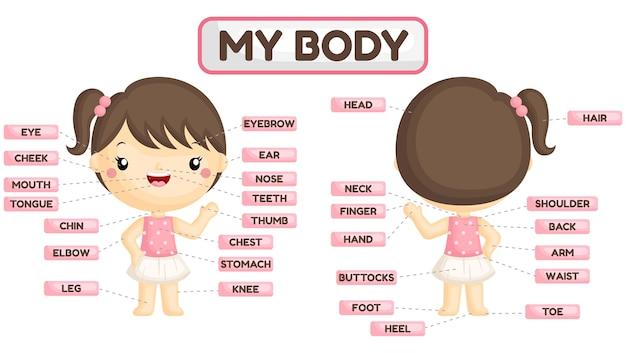 Nombre de las partes del cuerpo de la niña