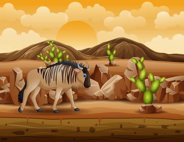 Ñu de dibujos animados camina por el desierto