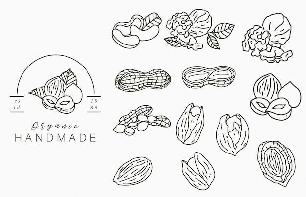 Nueces, colección, logotipo, con, avellana, nuez, maní., vector, ilustración, para, icono, logotipo, etiqueta, imprimible, y, tatuaje