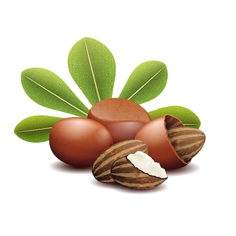 Nueces de karité con hojas verdes. nuez de karité marrón y nueces fetales orgánicas karité