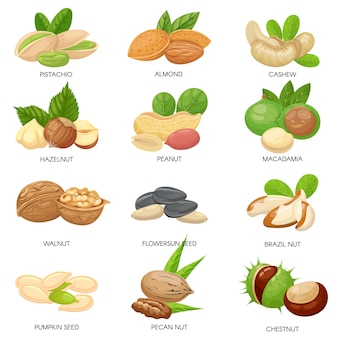 Nueces y semillas. bocadillos crudos de maní, nuez de macadamia y pistacho. semillas de plantas, anacardos saludables y semillas de girasol conjunto aislado