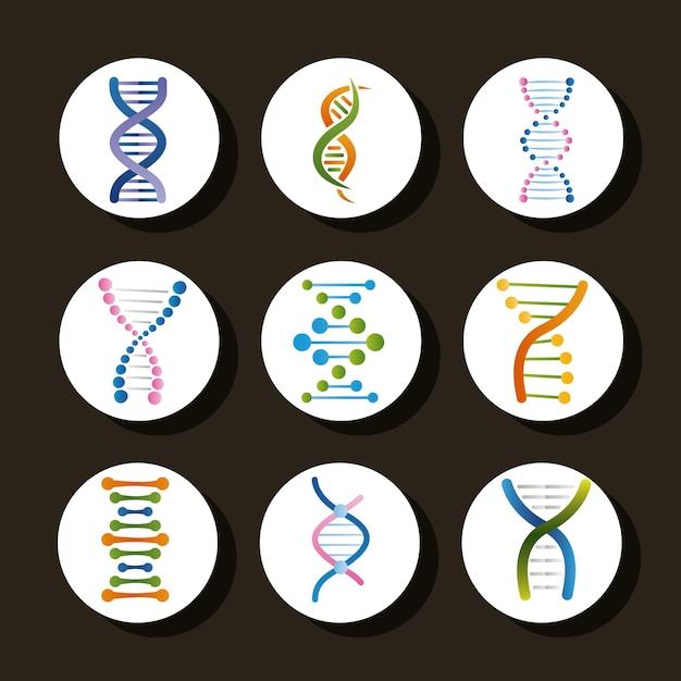Nueve iconos de conjunto genético de adn