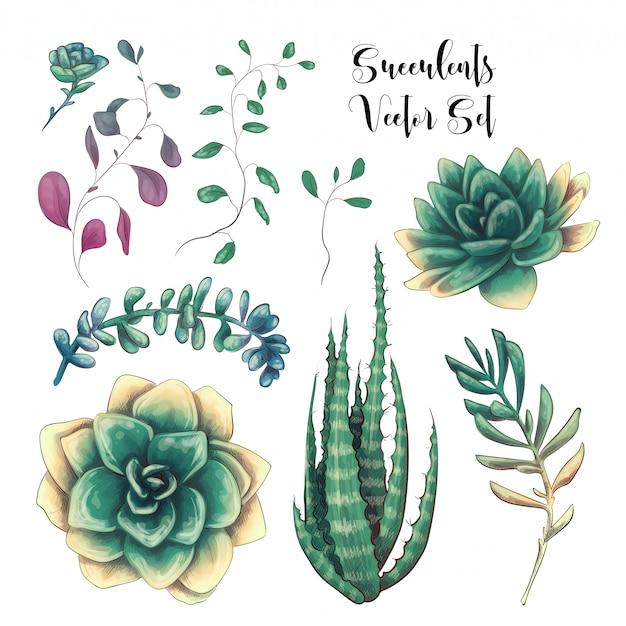 Objetos suculentos coloridos verdes del diseño del vector de los ramos.