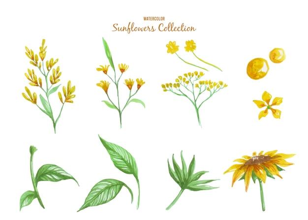 Obtenga la colección de ilustraciones en acuarela de encantadoras secciones de girasoles sobre un tema de verano soleado y bonito.