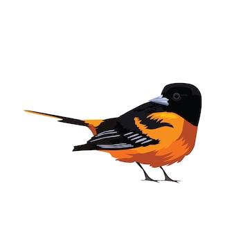 Oiseaux naranjas pájaro