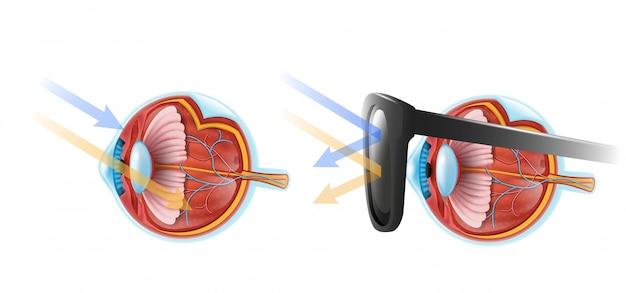 Ojos protección vector infografía