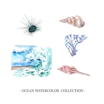 Ola, concha, coral ilustración acuarela sobre fondo blanco para uso decorativo.