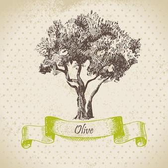 Olivo. ilustración dibujada a mano