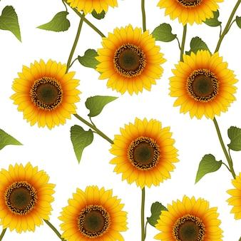 Orange yellow sunflower en el fondo blanco