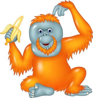 Orangután de dibujos animados comiendo plátano aislado sobre fondo blanco