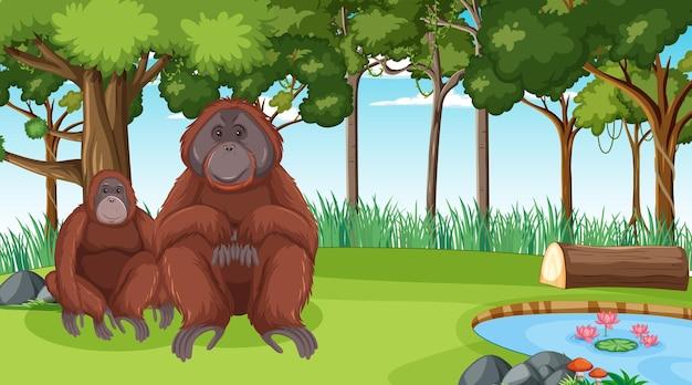 Orangután en escena de bosque o selva tropical con muchos árboles