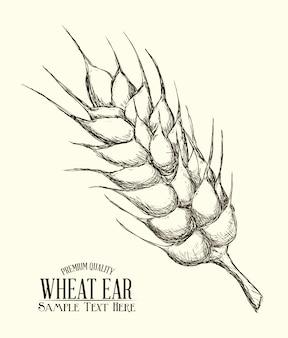 Oreja de trigo