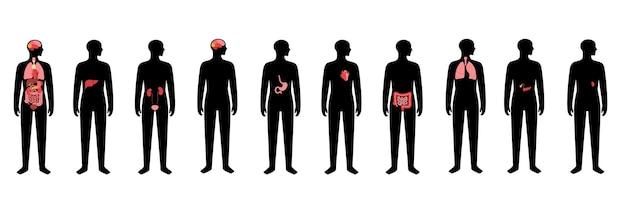 Órganos internos en el cuerpo del hombre. icono médico de cerebro, estómago, corazón, riñón y otros órganos