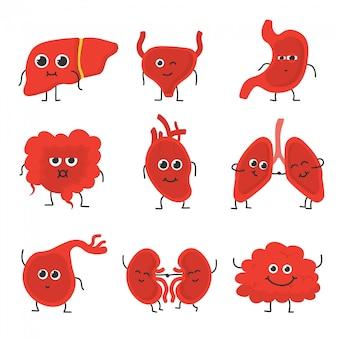 Órganos internos humanos. colección de dibujos animados divertidos de órgano circulatorio humano médico. corazón, hígado, cerebro, estómago, pulmones, órganos renales.