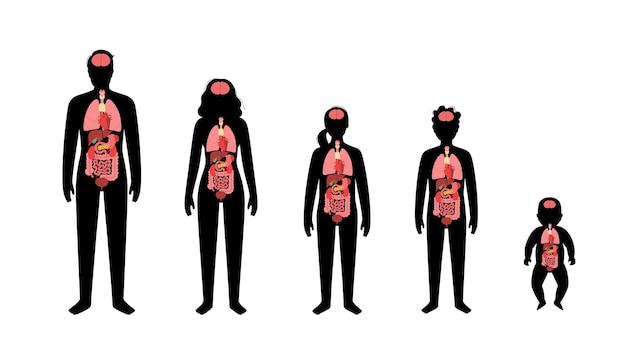 Órganos internos en silueta de bebé, niña, niño, hombre adulto y mujer.