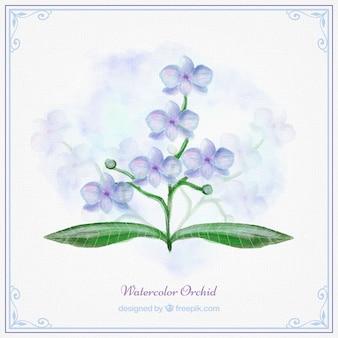 Orquídea azul de acuarela