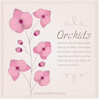 Orquídea rosa dibujada a mano