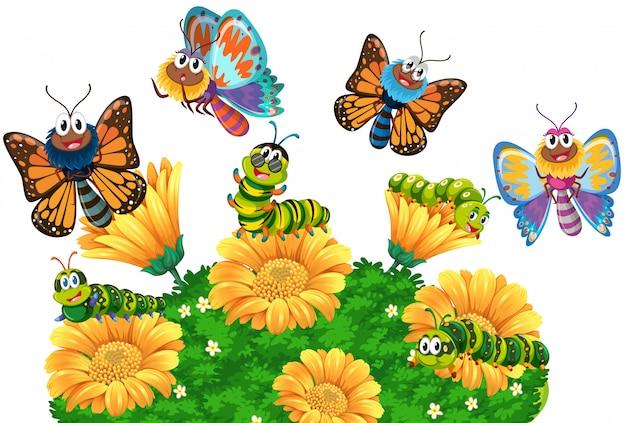 Orugas y mariposas en el jardín.