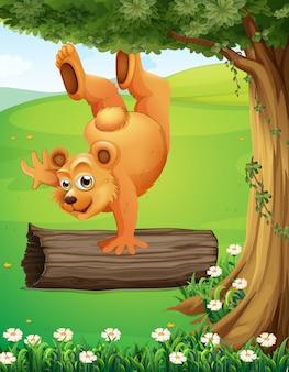 Un oso en la cima de la colina jugando cerca del árbol.