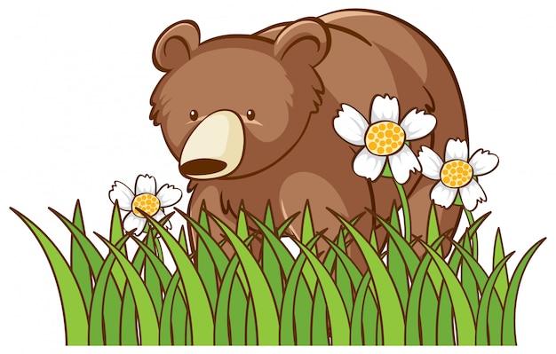 Oso grizzly aislado en jardín