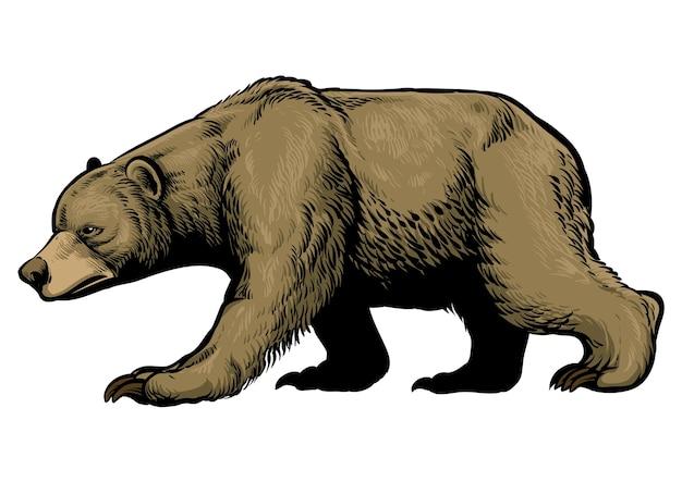 Oso grizzly marrón dibujado a mano
