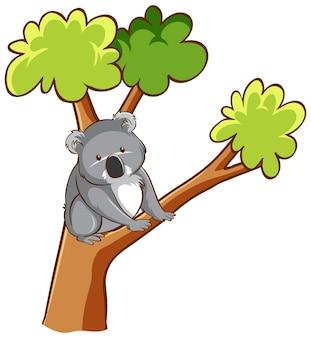 Oso koala en un árbol sobre fondo blanco.