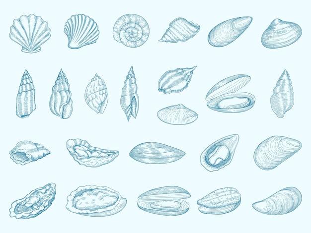 Ostra deliciosa. conchas gourmet para comer mariscos de dieta cocina tradicional francesa vector ilustraciones de ostras. ostra y mejillón, ingrediente marino de moluscos