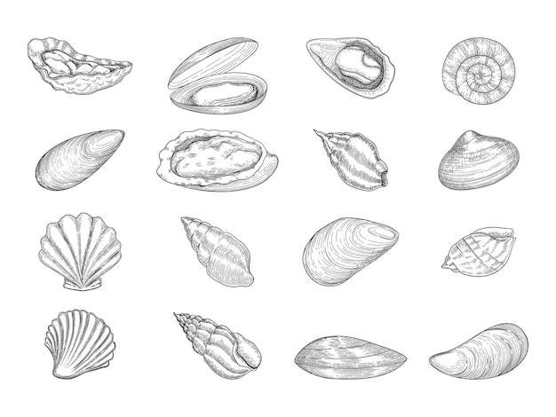 Ostra. productos gourmet de mariscos conchas frescas naturales vector doodle colección. menú de mar de ostras, cocina deliciosa o preparada ilustración de manjar