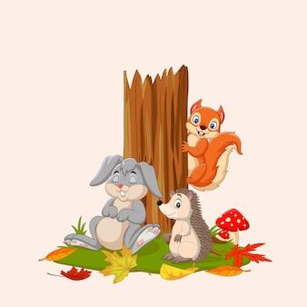 Otoño con animales salvajes