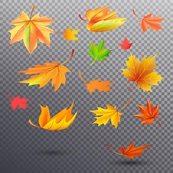 Otoño caído hojas de arce de color naranja brillante, amarillo soleado y verde saturado