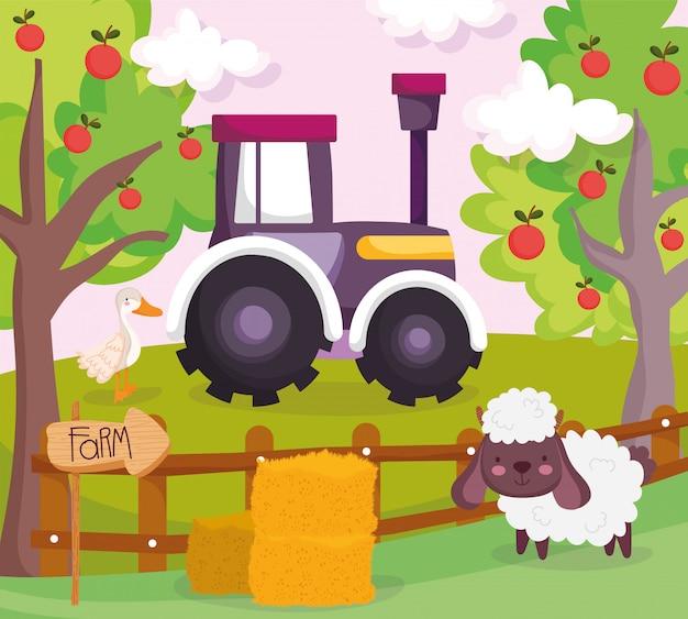 Oveja pato tractor árboles frutales heno valla de madera animales de granja