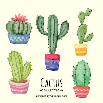 Pack adorable de cactus en acuarela