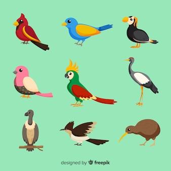 Pack de aves exóticas planas