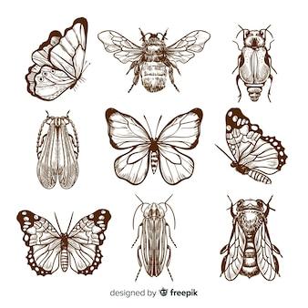 Pack bocetos de insectos realistas dibujados a mano