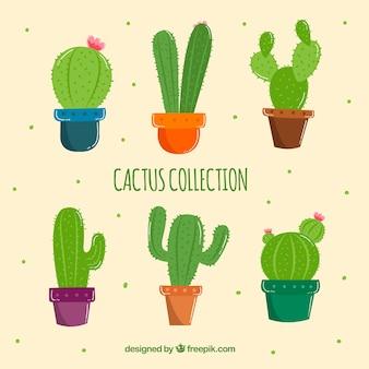 Pack de cactus dibujados a mano