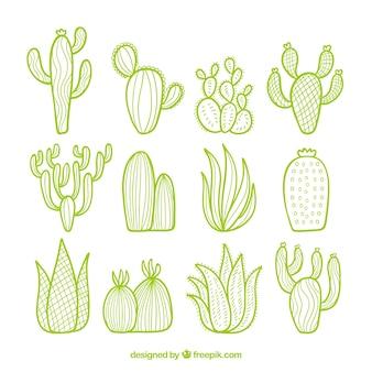 Pack de cactus con estilo de dibujo a mano