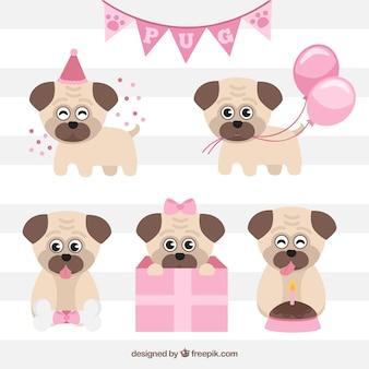 Pack de cumpleaños con carlinos adorables