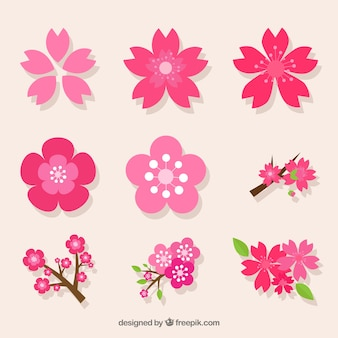 Pack decorativo de variedad de flores del cerezo Vector Premium