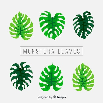 Pack hojas monstera dibujadas a mano