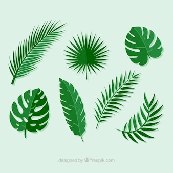 Pack de hojas de palmeras