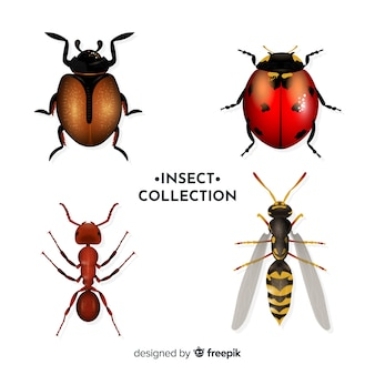 Pack insectos realistas