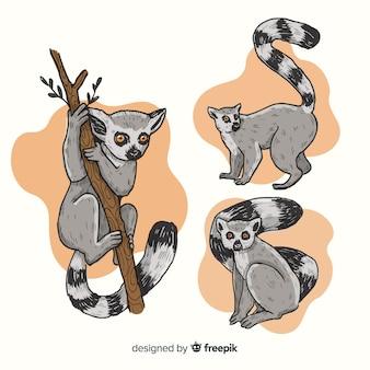 Pack de lémur dibujado a mano