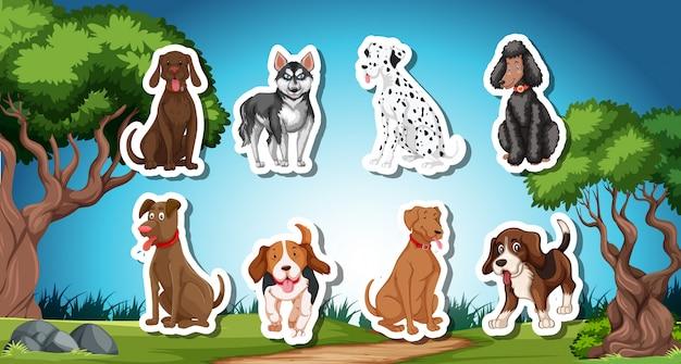 Pack de palitos de perro con fondo de naturaleza