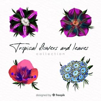 Pack plantas exóticas dibujadas a mano