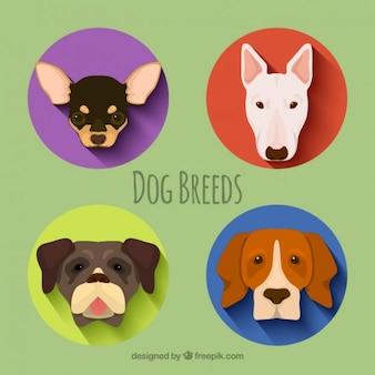 Pack de razas de perro