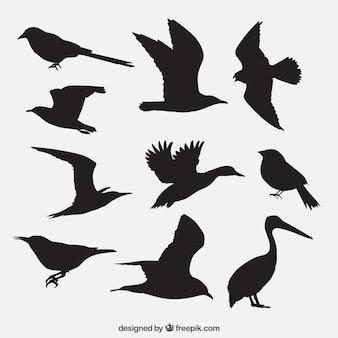 Pack de siluetas de pájaros