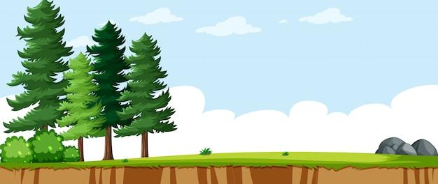 Paisaje en blanco en la escena del parque natural con algunos pinos